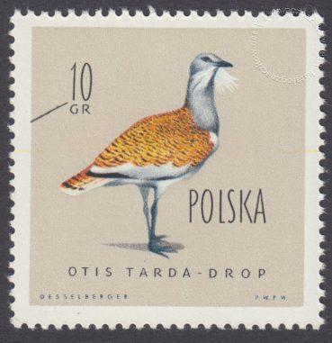 Ptaki chronione w Polsce - 1062