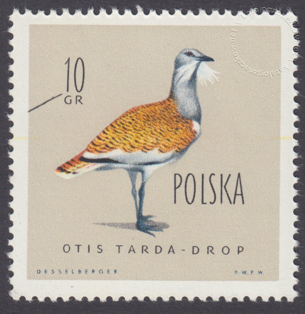 Ptaki chronione w Polsce znaczek nr 1062