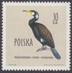 Ptaki chronione w Polsce - 1064