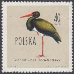 Ptaki chronione w Polsce - 1065