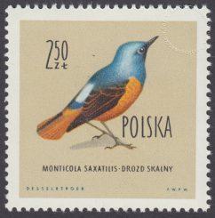 Ptaki chronione w Polsce - 1070