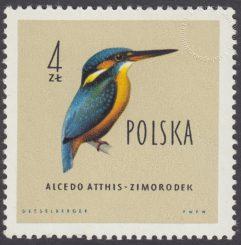 Ptaki chronione w Polsce - 1071