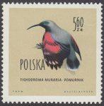 Ptaki chronione w Polsce - 1072