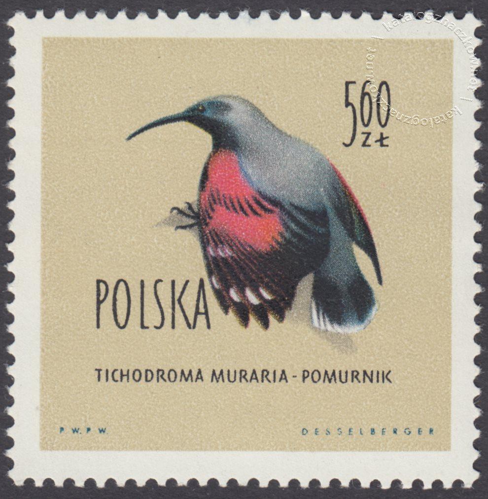 Ptaki chronione w Polsce znaczek nr 1072