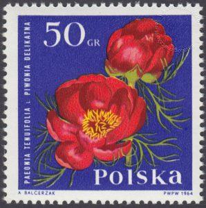 Kwiaty ogrodowe - 1395