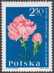 Kwiaty ogrodowe - 1401