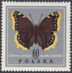 Motyle - 1653