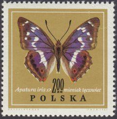 Motyle - 1654