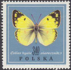 Motyle - 1656