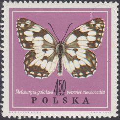 Motyle - 1657
