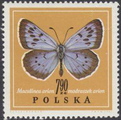 Motyle - 1658