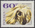 Rasy psów - 1753