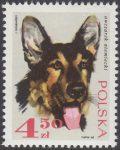 Rasy psów - 1757