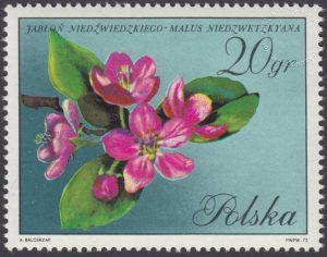Kwiaty drzew - 1986