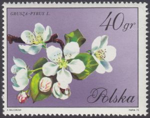 Kwiaty drzew - 1987