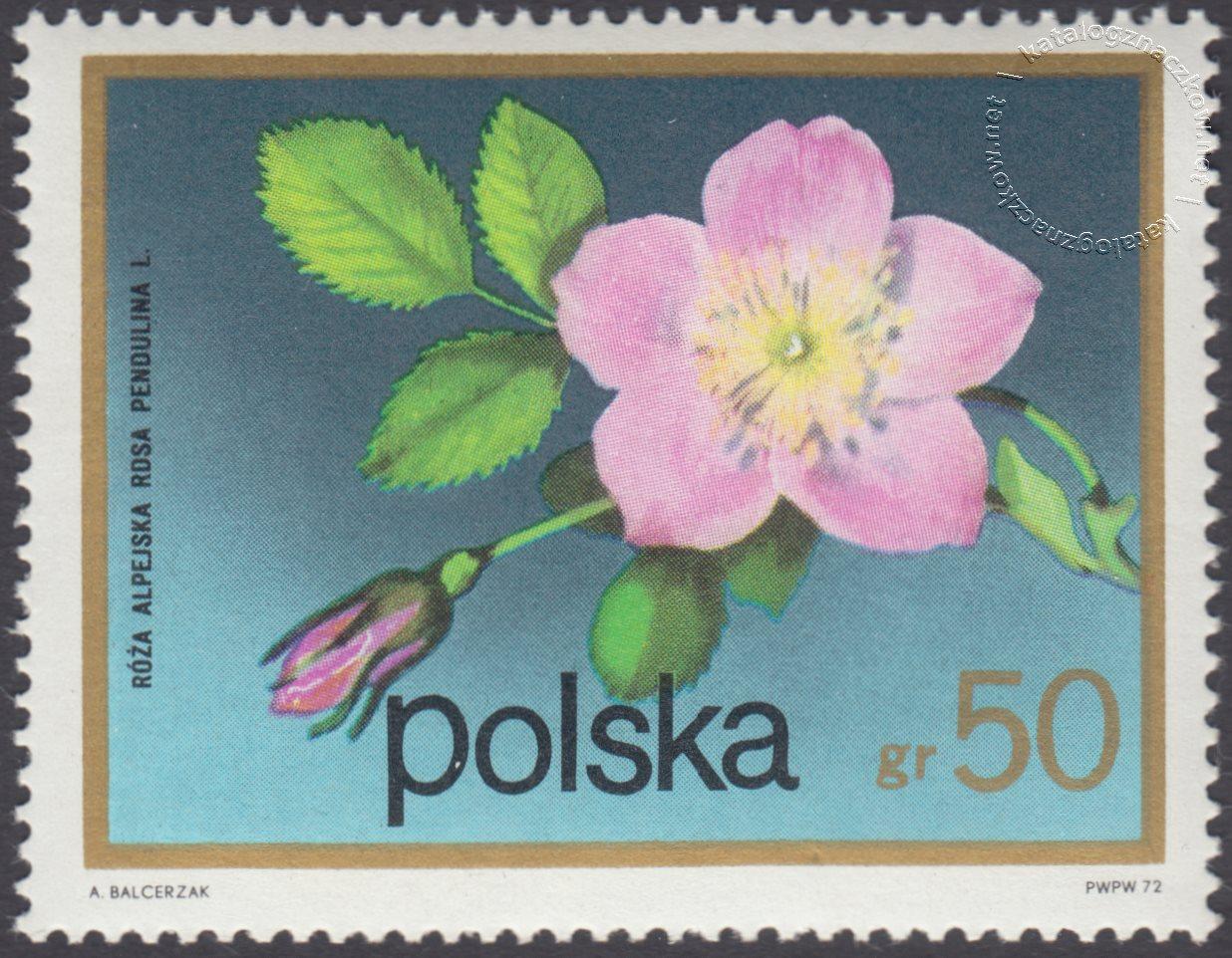 Kwiaty krzewów znaczek nr 2068