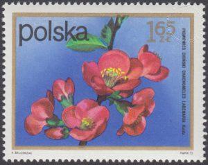 Kwiaty krzewów - 2070