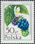 Owoce leśne - 2340