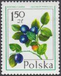 Owoce leśne - 2343