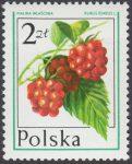 Owoce leśne - 2344