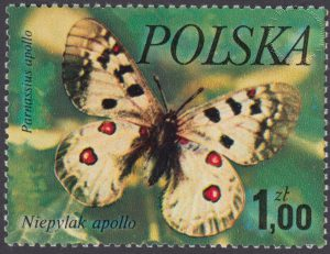 Motyle - 2369