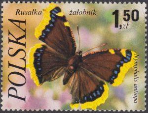 Motyle - 2371