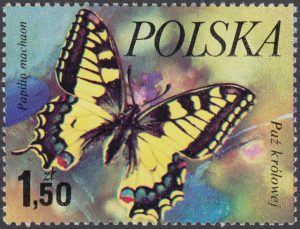 Motyle - 2372