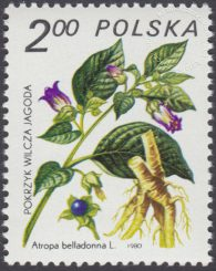 Rośliny lecznicze - 2558