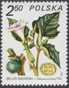 Rośliny lecznicze - 2559