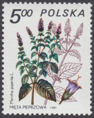 Rośliny lecznicze - 2561