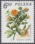Rośliny lecznicze - 2562