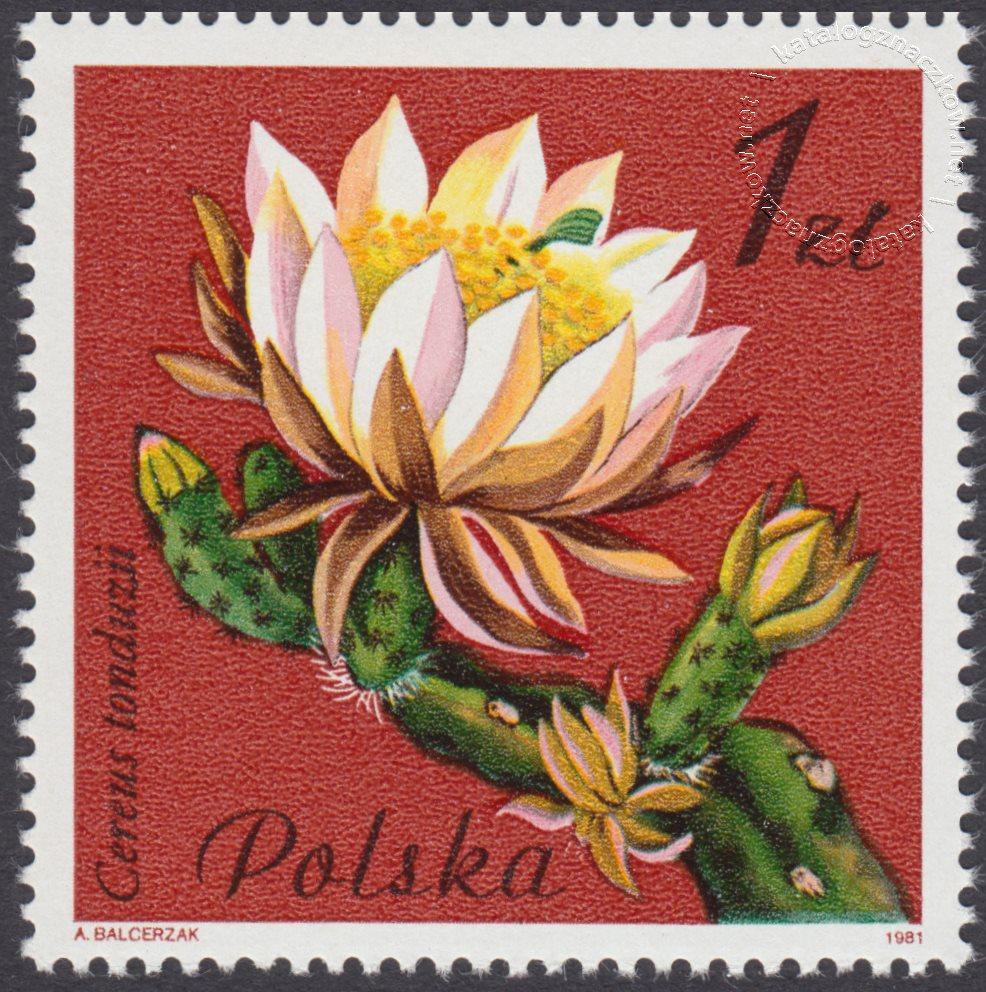 Kwiaty sukulentów – kaktusy znaczek nr 2637