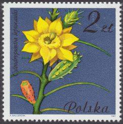 Kwiaty sukulentów - kaktusy - 2638
