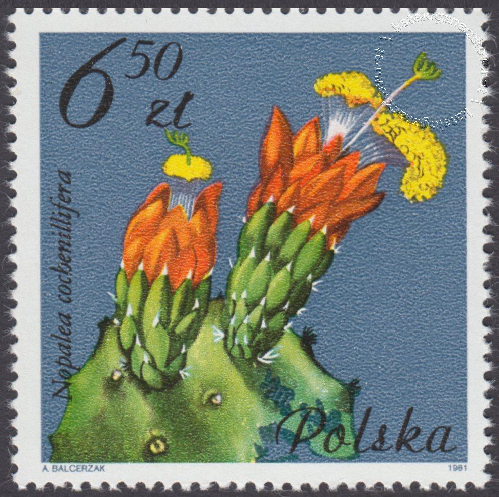 Kwiaty sukulentów – kaktusy znaczek nr 2641