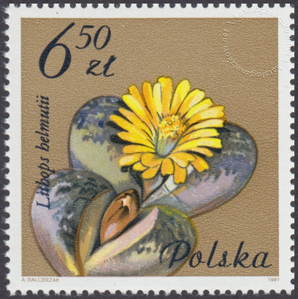 Kwiaty sukulentów – kaktusy znaczek nr 2642