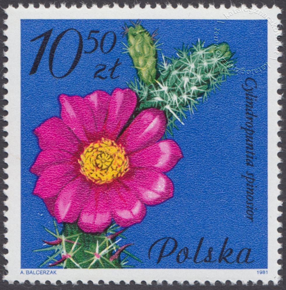Kwiaty sukulentów – kaktusy znaczek nr 2643