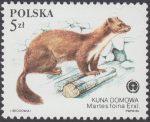 Chronione zwierzęta futerkowe - 2799
