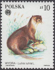 Chronione zwierzęta futerkowe - 2802
