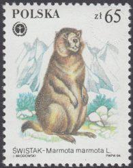 Chronione zwierzęta futerkowe - 2803
