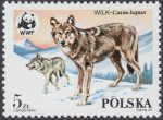 Dzikie zwierzęta chronione - wilk - 2827