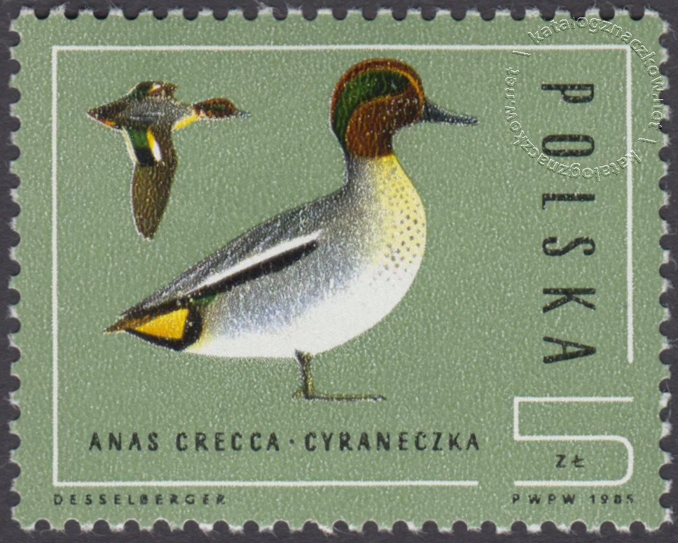 Ptaki – dzikie kaczki znaczek nr 2850