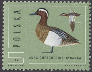 Ptaki - dzikie kaczki - 2851