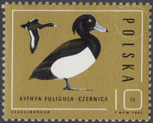 Ptaki - dzikie kaczki - 2852