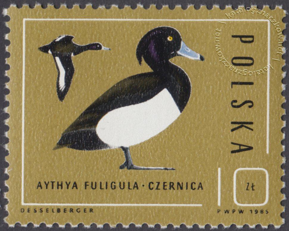 Ptaki – dzikie kaczki znaczek nr 2852