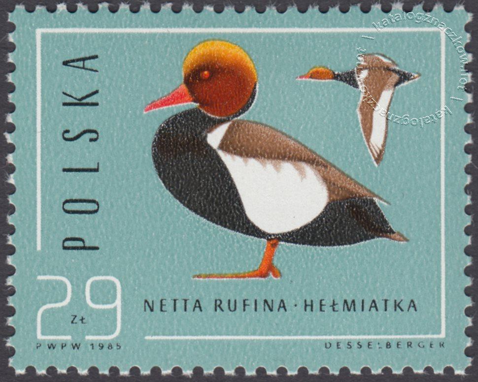 Ptaki – dzikie kaczki znaczek nr 2855
