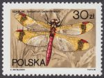 Ważki polskie - 2990