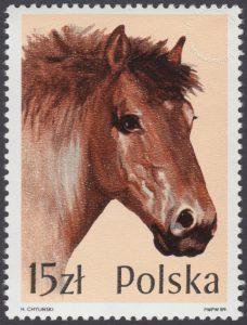 Konie - 3043