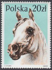 Konie - 3045