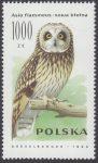 Sowy - 3149
