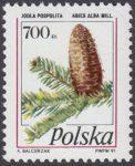 Owoce drzew iglastych - 3164